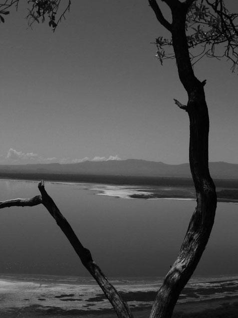 La lago Naivasha, areanta 170 km2, ŝirmas diversspecan faŭnon.